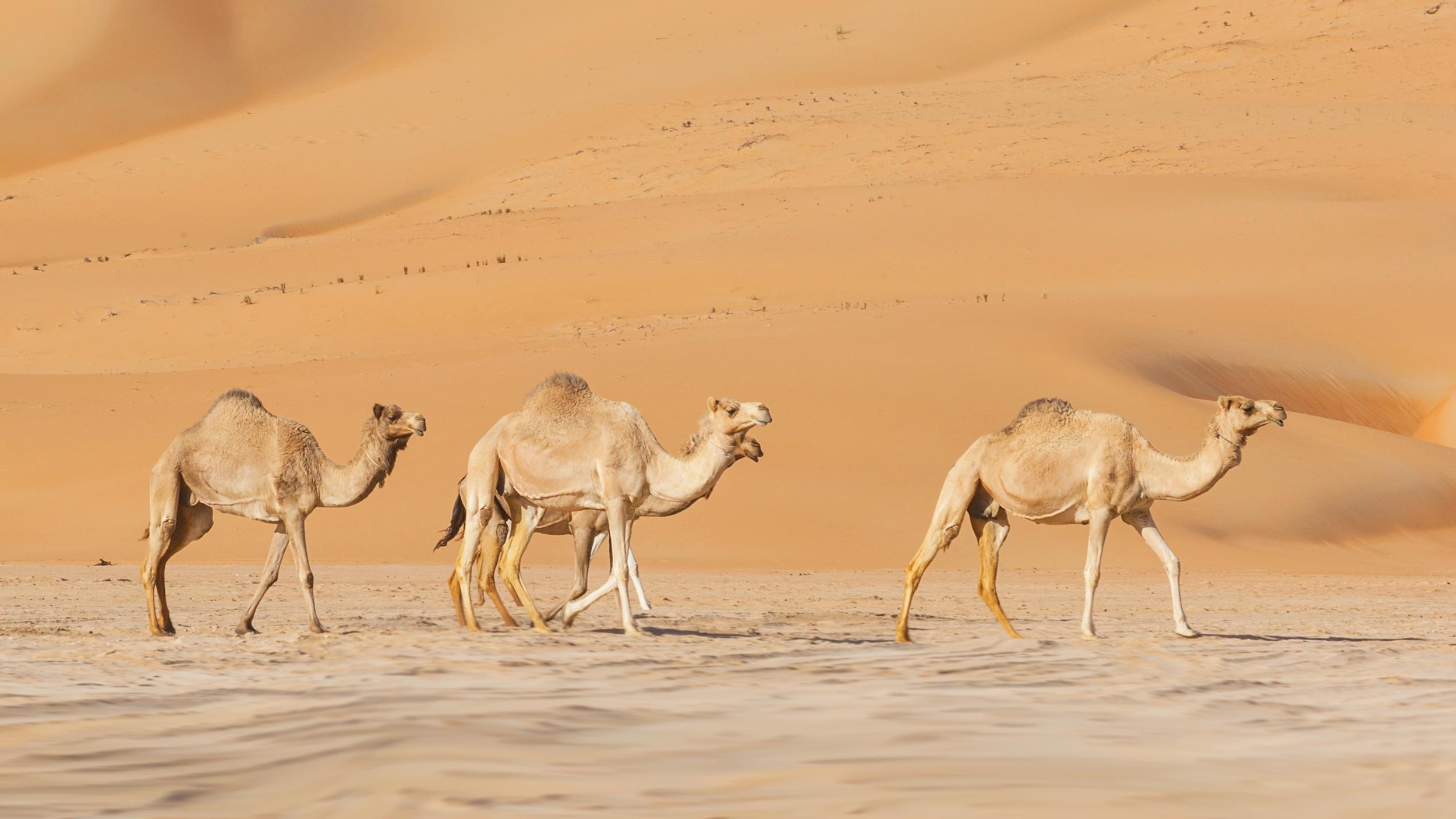 Destination: Dubai and Abu Dhabi
